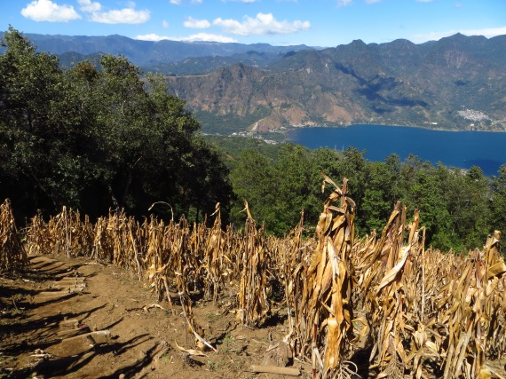 the trail passes through fields of maize along the lower section Photo Stephan Lorenz