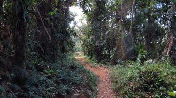 Trail through good cloud forest Photo Stephan Lorenz