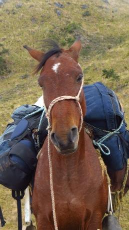 Our trusty horse Pinocho Photo Stephan Lorenz